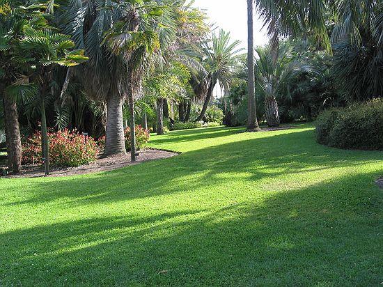 Palm Garden Huntington Library Botanical Gardens In Pasadena